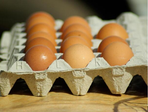 risks of investing in egg tray production line