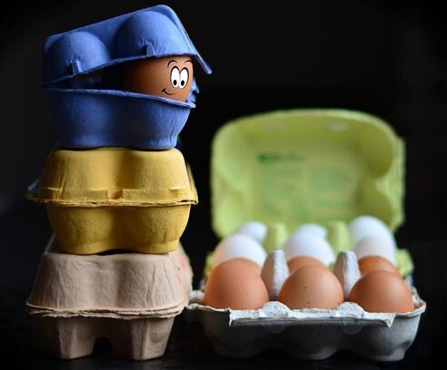 Why Manufacturing Egg Trays from Waste Is Profitable Business Idea